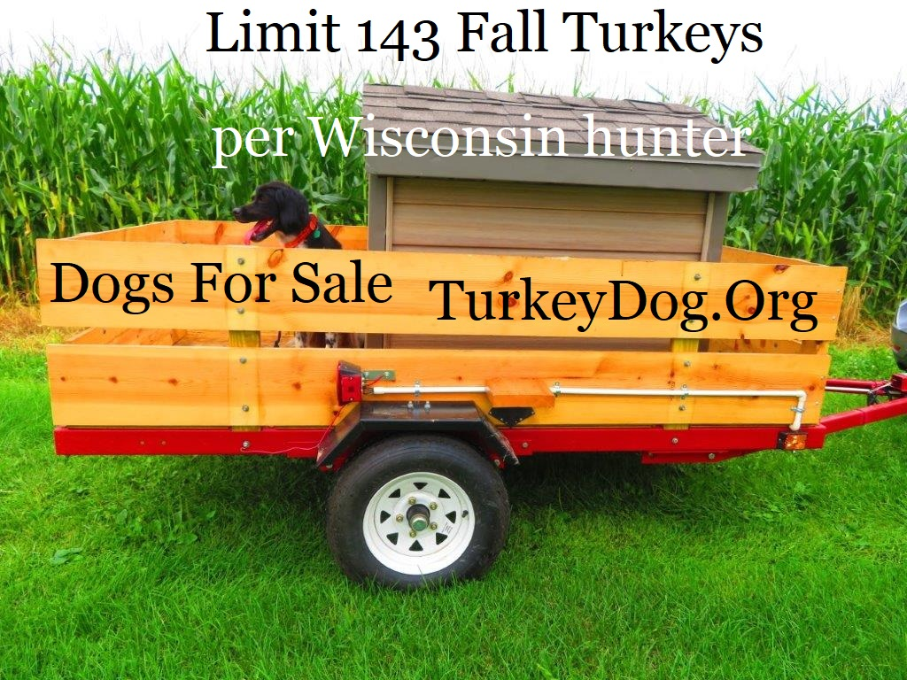 Bird dog hunts more turkeys than pheasants